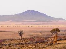 Vista escénica de las montañas Namibia de Rostock con primero plano de dos árboles del estremecimiento fotos de archivo
