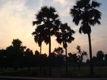 Vista escénica de palmeras Foto de archivo libre de regalías
