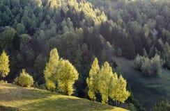 Vista escénica de una ladera verde con los árboles en luz del sol y un bosque Imágenes de archivo libres de regalías