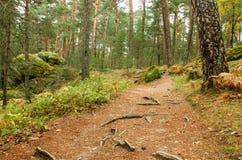 Vista escénica de una trayectoria de bosque en el parque natural de Boca del Asno en un día lluvioso en Segovia, España Fotos de archivo