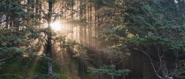 Vista escénica del árbol con la luz de la puesta del sol, estilo del vintage foto de archivo libre de regalías