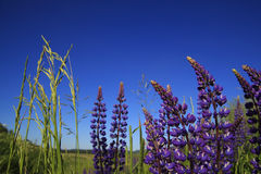 Vista escénica del campo del verano Imagen de archivo