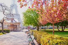 Vista esc?nica de la torre Eiffel con la flor de cerezo imagen de archivo