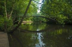 Vista escandinava verde brilhante bonita ao lado do rio Imagens de Stock Royalty Free