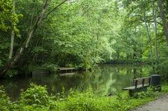 Vista escandinava verde brilhante bonita ao lado do rio Fotografia de Stock