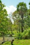 Vista esotica di panorama sul lago tropicale verde Immagine Stock Libera da Diritti