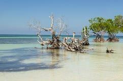 Vista exótica de la playa Imagen de archivo libre de regalías