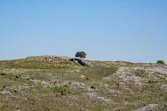 Vista fantastica sopra un albero solitario fotografia stock libera da diritti