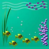 Vista Fishy Imagem de Stock Royalty Free