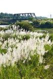 Vista flowers grass and Bridge railway Stock Images