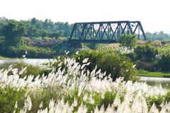 Vista flowers grass and Bridge railway Royalty Free Stock Photo