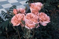 Vista fresca romântica do chique gasto bonito próximo das rosas do rosa do ramalhete do vintage imagem de stock royalty free