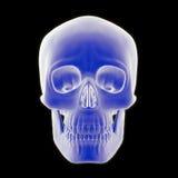 Vista frontale del cranio umano Fotografie Stock Libere da Diritti