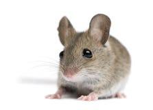Vista frontale del mouse di legno
