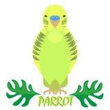 Vista frontale isolata pappagallo su bianco Uccello verde Immagini Stock