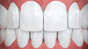 Vista frontale sui denti anteriori bianchi scintillanti fotografia stock