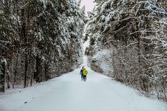 Vista general del callejón del invierno en bosque Fotos de archivo