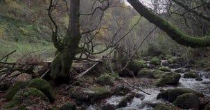 Vista general del curso del río en el medio de un bosque metrajes