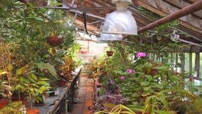 Vista geral da estufa com plantas da flor video estoque