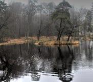 Vista geral do lago no outono Imagem de Stock