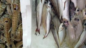 Vista geral dos peixes frescos contidos em umas caixas do poliestireno no mercado video estoque