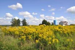 Vista gialla carica Fotografie Stock