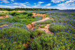 Vista granangular de los Wi famosos de Texas Bluebonnet (texensis del Lupinus) Imagen de archivo