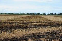 Vista granangular de un campo que se ha quemado para despejar residuo de la cosecha Foto de archivo libre de regalías