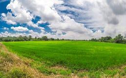 Vista granangular del campo verde del arroz con el cielo nublado dramático en la zona rural de Tailandia fotografía de archivo libre de regalías