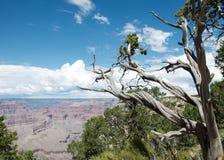 Vista in Grand Canyon Fotografia Stock