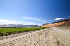 Vista grandangolare della strada della ghiaia accanto ad un giacimento irrigato enorme dell'uva e delle montagne del deserto dall fotografie stock