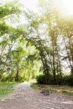 Vista grandangolare in foresta con gli alberi verdi ed il sole luminoso Fotografie Stock