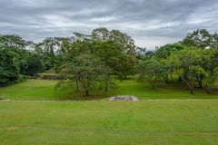 Vista of a green jungle behind a grass field in the Maya city st royalty free stock photo