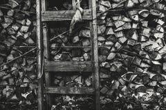 Vista Greyscale de la acción de la leña con la escalera de mano Foto de archivo libre de regalías