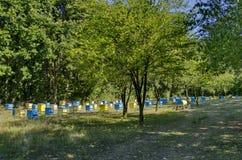 Vista hacia el colmenar con la colmena de la abeja en el campo en el bosque Foto de archivo libre de regalías