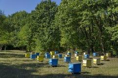 Vista hacia el colmenar con la colmena de la abeja en el campo en el bosque Imágenes de archivo libres de regalías