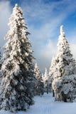 Vista hivernal de la madera nevosa en las montañas Imagen de archivo