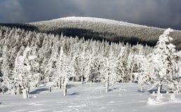 Vista hivernal del bosque nevoso en la montaña Imagen de archivo libre de regalías