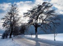 Vista hivernal del camino alineado árbol Imagen de archivo libre de regalías