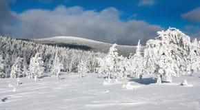 Vista hivernal de la madera nevosa en las montañas Foto de archivo libre de regalías