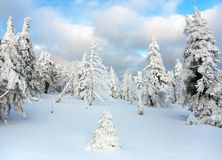 Vista hivernal hermosa de la madera nevosa en las montañas Imagen de archivo