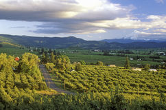 Vista of Hood River Valley with Mt. Hood, OR Royalty Free Stock Photo