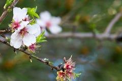 Vista horizontal del cierre para arriba de flores anaranjadas en la primavera verde GR Foto de archivo libre de regalías