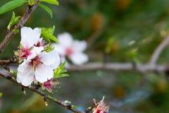 Vista horizontal del cierre para arriba de flores anaranjadas en la primavera verde GR Imagen de archivo libre de regalías