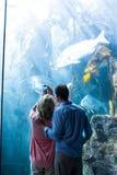 Vista a ideia de um par que toma a foto dos peixes Imagens de Stock Royalty Free