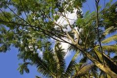 Vista imponente del paisaje tropical de la isla hermosa de Bali con la selva de las palmeras del bramido debajo de un cielo azul  imagenes de archivo