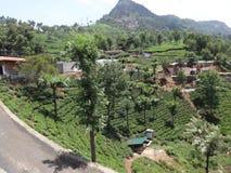 Vista impressionante del giardino di tè dalla cima della strada della collina del modo del percorso del giardino di tè Fotografia Stock