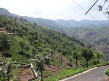 Vista impressionante del giardino di tè dalla cima della strada della collina del modo del percorso del giardino di tè Fotografia Stock Libera da Diritti