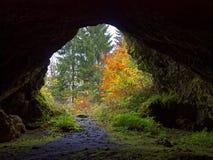 Vista incurvata della caverna da cadere foresta Fotografie Stock