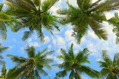 Vista inferior da floresta tropical das palmeiras no fundo do céu azul Imagens de Stock